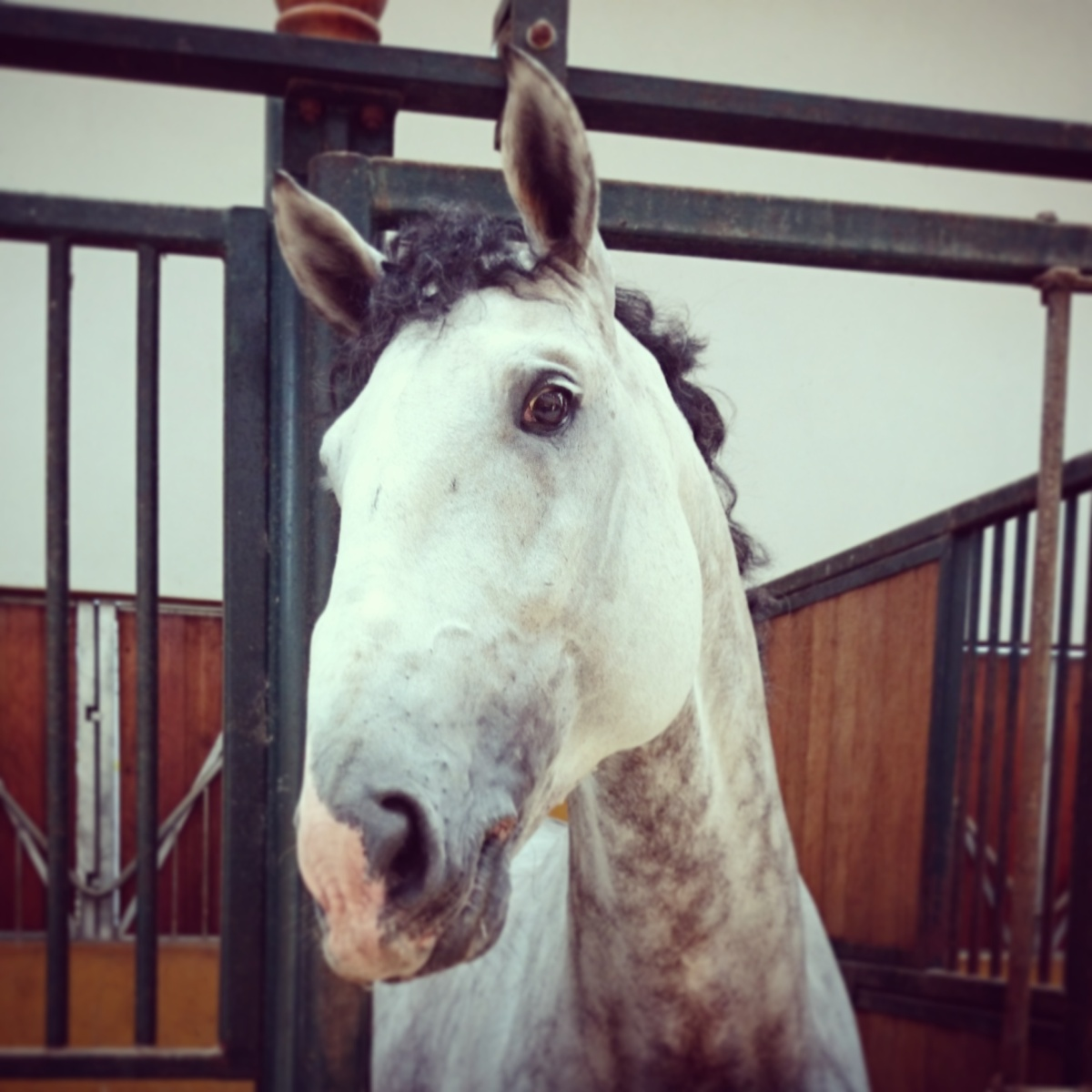 Readers' Choice: What Our Horses Pick UpOn…