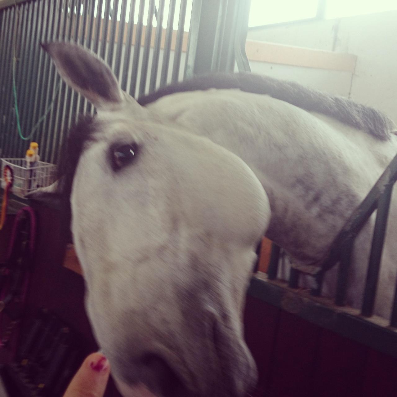Bipolar Horse