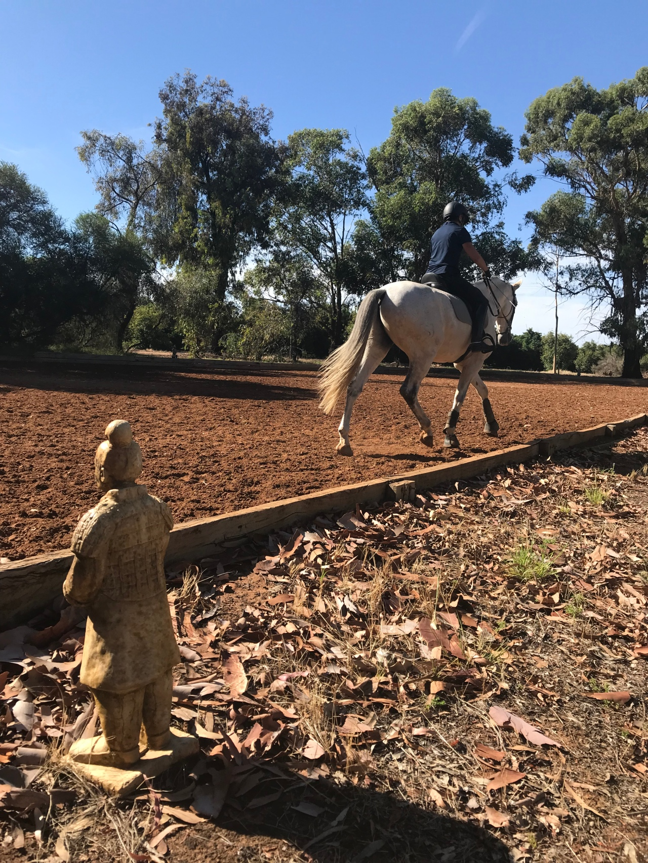 Pregnancy…Horseriding, hormones, homesick
